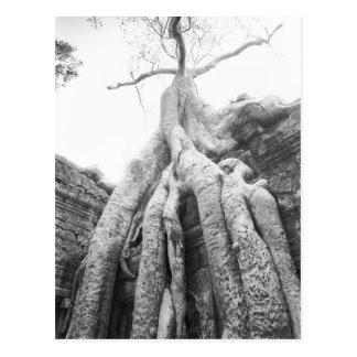 Carte Postale Angkor Cambodge, arbre merci Prohm