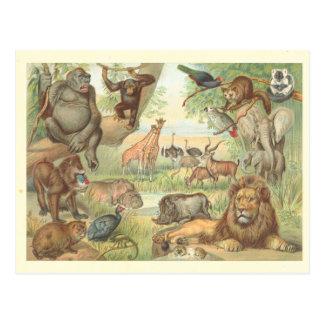 Carte Postale Animaux sauvages de l'Afrique