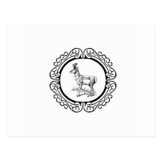Carte Postale anneau de pronghorn