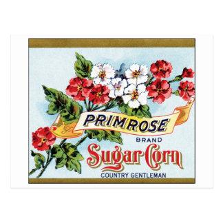 Carte Postale Annonce de cru de maïs de sucre de primevère