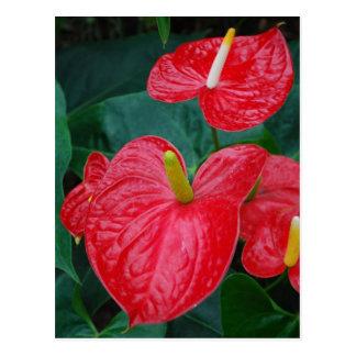 Carte Postale Anthure rouge - fleur tropicale