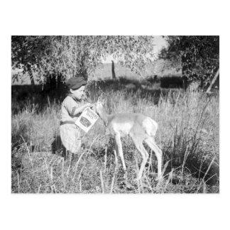 Carte Postale Antilope de alimentation de garçon