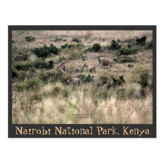 Carte Postale Antilopes d'éland au parc national de Nairobi,