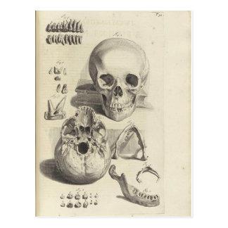 Carte postale antique d'anatomie de crâne