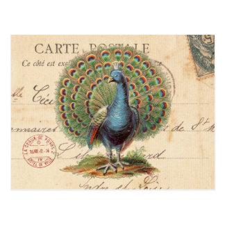 Carte postale antique vintage de paon