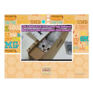 Carte Postale Appel 1-800-LOLCATS