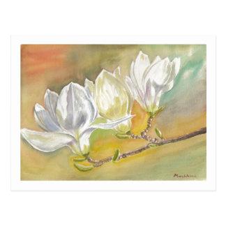 Carte Postale Aquarelle de floraison de magnolia par E.Mashkina