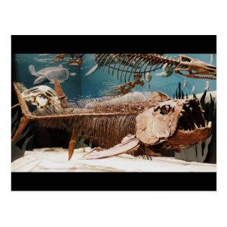 Carte postale aquatique de Dino