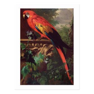 Carte Postale Ara d'écarlate dans un paysage (huile sur la