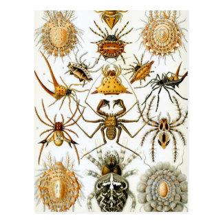 Carte Postale Arachnides de Haeckel