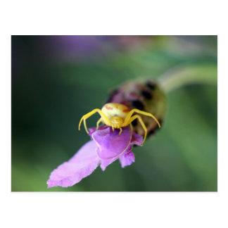 Carte Postale Araignée de crabe de fleur