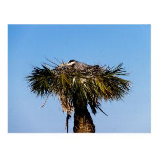 Carte Postale Arbre bleu de nid d'oiseau de héron