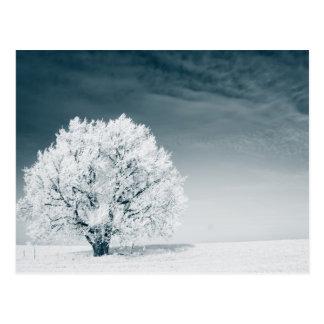 Carte Postale Arbre congelé sur le champ d'hiver et le ciel bleu