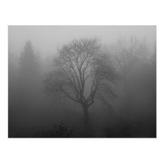 Carte Postale Arbre dans le brouillard
