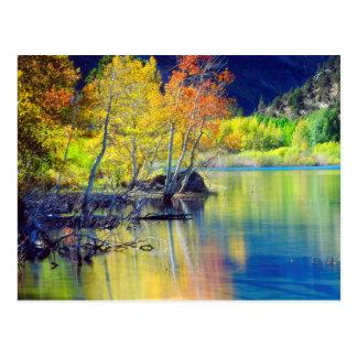 Carte Postale Arbre d'Aspen en automne se reflétant dans le lac