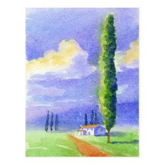 Carte Postale Arbre de Cypress