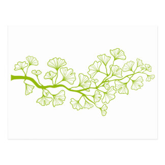 Carte Postale arbre de ginkgo avec le feuille vert