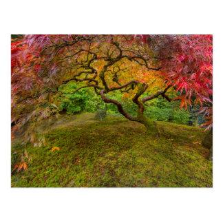 Carte Postale Arbre d'érable japonais dans la couleur d'automne