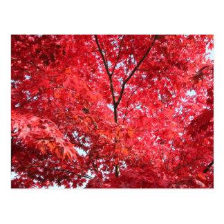 Carte Postale Arbre d'érable japonais rouge lumineux