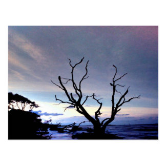 Carte Postale Arbre nu sur le rivage au coucher du soleil