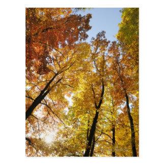 Carte Postale Arbres colorés