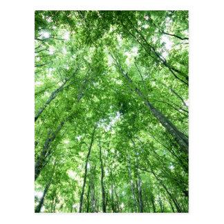 Carte Postale Arbres dans une forêt de la vue inférieure