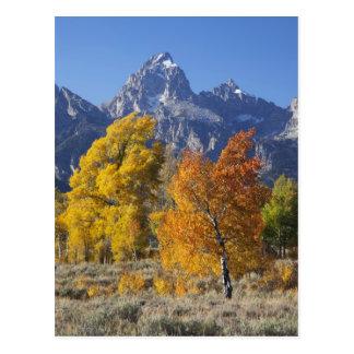 Carte Postale Arbres d'Aspen avec la gamme de montagne de Teton