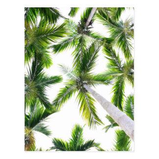 Carte Postale Arbres de noix de coco