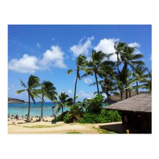 Carte Postale Arbres de noix de coco d'Hawaï de baie de Hanauma