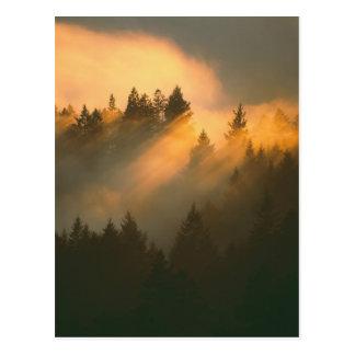 Carte Postale Arbres de séquoia en brouillard côtier, le comté