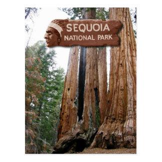 Carte Postale Arbres de séquoia géant, parc national de séquoia,