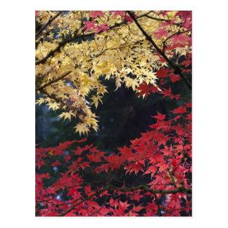 Carte Postale Arbres d'érable dans la couleur d'automne