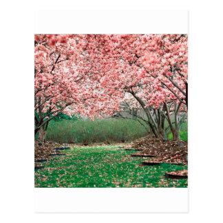 Carte Postale Arbres en pleine floraison
