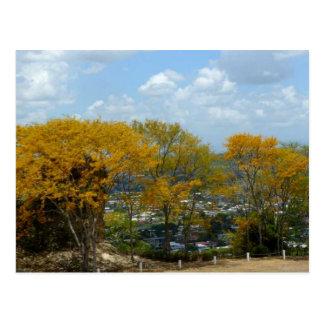 Carte Postale Arbres jaunes de Poui sur la colline de San