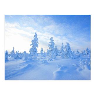 Carte Postale arbres neigeux en Laponie en Finlande