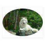 Carte postale arctique de loup