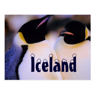 Carte postale arctique de pingouins de l'Islande