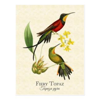 Carte postale ardente d'art de colibris de topaze