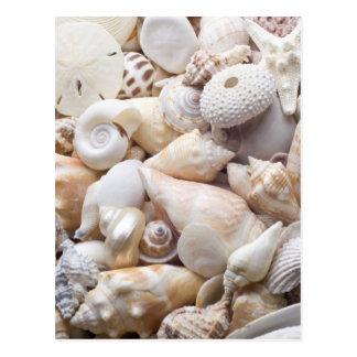 Carte Postale Arrière - plan de Shell de mer de la Floride - la