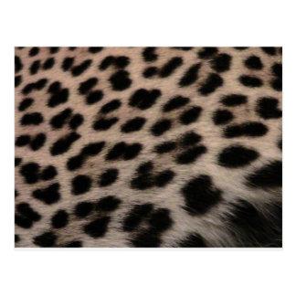 Carte Postale Arrière - plan d'empreinte de léopard