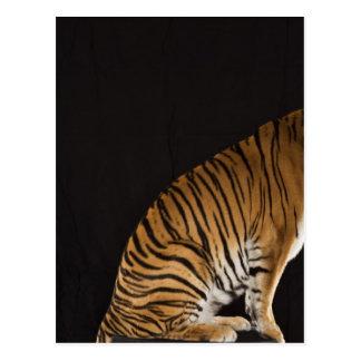 Carte Postale Arrière saison de tigre se reposant sur la