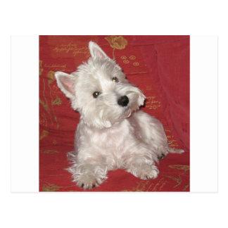 Carte Postale Art de chien : le Westie