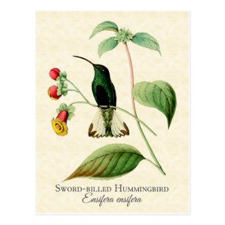 Carte Postale Art de cru de colibri affiché par épée