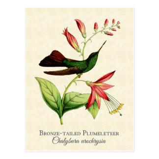 Carte Postale Art de cru de colibri de Plumeleteer coupé la
