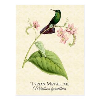 Carte Postale Art de cru de colibri de queue en métal de Tyrian
