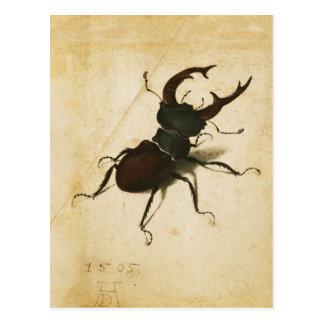 Carte Postale Art de cru de la Renaissance de scarabée de mâle