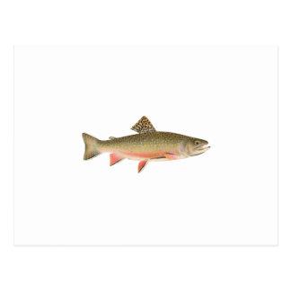 Carte Postale Art de truite de ruisseau