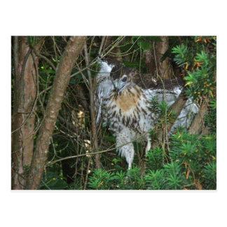 Carte Postale Articles coordonnés de faucon coupés la queue par