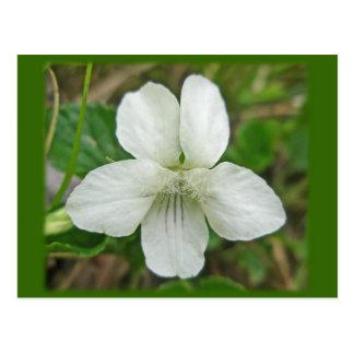 Carte Postale Articles coordonnés violets sauvages blancs