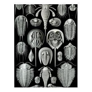 Carte Postale Aspidonia d'Ernst Haeckel